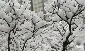 2020年北京冬天的第一场雪